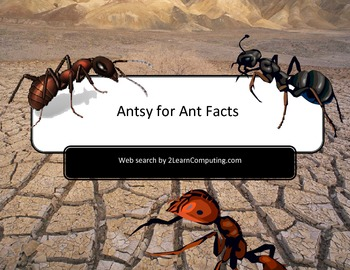 Amazing Ants Online Web Search