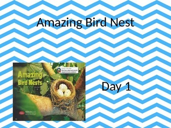 Amazing Bird Nest Powerpoint and interactive notebook
