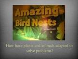 Amazing Bird Nests