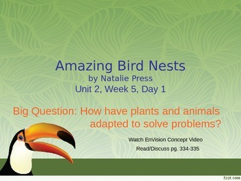 Amazing Bird Nests PowerPoint Reading Street 3.2.5