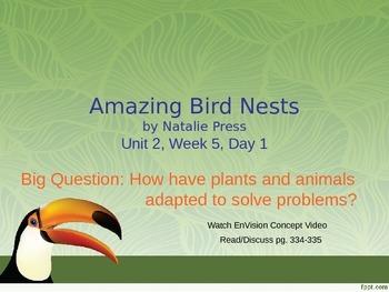 Amazing Bird Nests PowerPoint Reading Street 3.2.5
