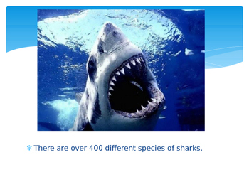 Amazing Facts about Sharks