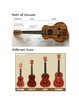 Amazing How-To Guide to learning the ukulele!