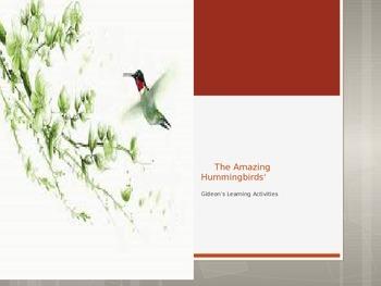 Birds- Amazing Hummingbirds