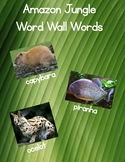 Amazon Jungle Word Wall Words