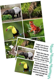 Amazon Rainforest Animal Cards