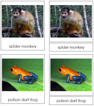 Amazon Rainforest Animals: 3-Part Cards