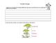 Amazon Rainforest- Read The Room- Grades 4-7