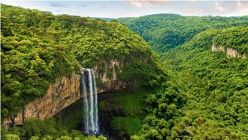 Amazon Rainforest Scenario Cards