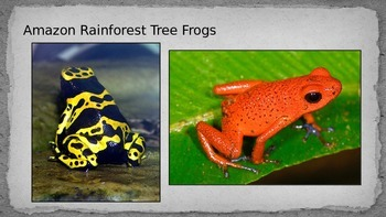 Amazon Rainforest Tree Frog Pop Art Project Inspired by Warhol Presentation