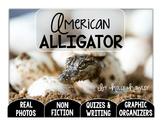 America's ALLIGATOR--A Research Project