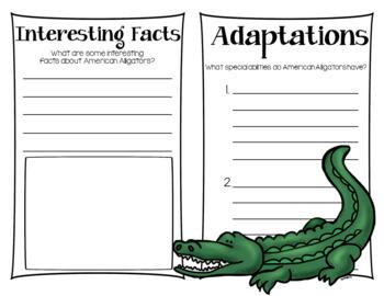 American Alligator Research Book