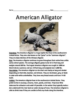 American Alligator - Review Article Information Facts Questions Vocabulary