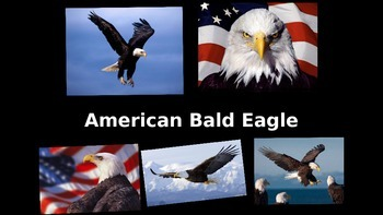 American Bald Eagle PowerPoint
