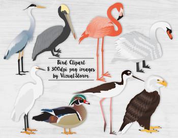 Bird Clip Art, 8 Hand Drawn Birds, Detailed Wildlife Clipart Illustrations