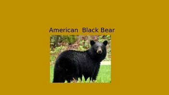 American Black Bear - Power Point - Information Facts Pictures