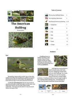 American Bullfrog: Text-Based Exploration of a Fascinating Frog