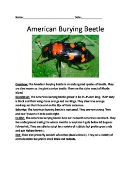 American Burying Beetle - info review article & lesson - Rhode Island insect