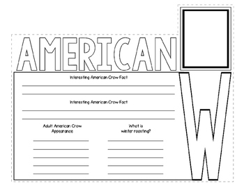 American Crow Webquest Layered Book