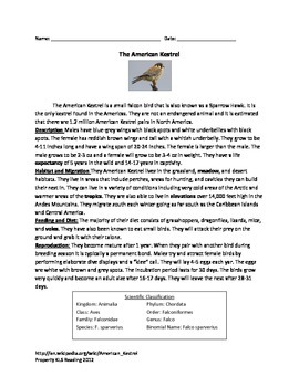 American Kestral - bird - information article questions vocabulary word search