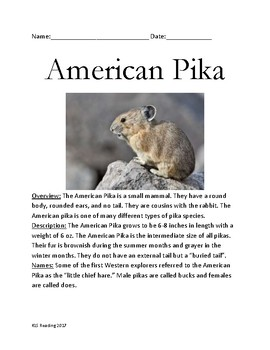 American Pika - informational article lesson facts and review questions