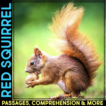 American Red Squirrel Informational Article, Comprehension Activities