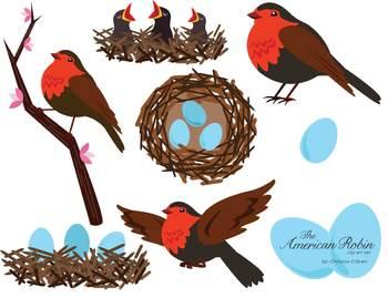 American Robin Bird Clip Art Set