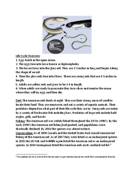American eel - lesson facts information questions review