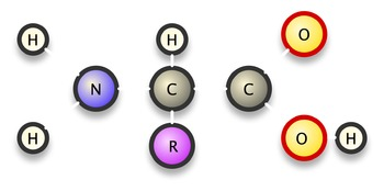 Amino Acid Graphics for PowerPoint Presentations