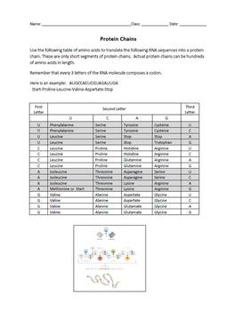 Amino Acid Sequencing and Protein Chains