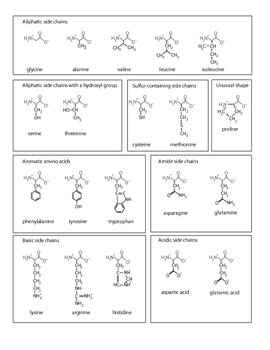 photo regarding Amino Acid Flashcards Printable identified as Amino Acid Proteins Worksheets Training Materials TpT