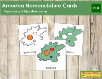 Amoeba Nomenclature Cards