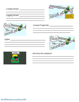 DNA Replication Video Notes - Amoeba Sisters
