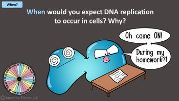 Amoeba Sisters Unlectured Series- DNA REPLICATION