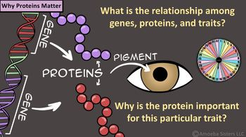 Amoeba Sisters Unlectured Series- PROTEIN SYNTHESIS