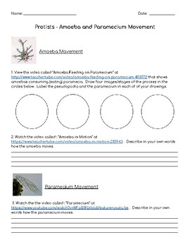 Amoeba and Paramecium Movement Worksheet