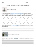 Amoeba and Paramecium Movement Worksheet
