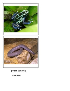 Amphibian Classified Cards