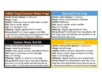 Amphibian Information Flashcards