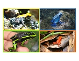 Amphibian Information Flashcards