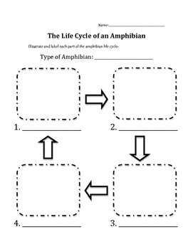 Amphibian Life Cycle
