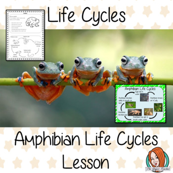 Amphibian Life Cycles Complete Science Lesson