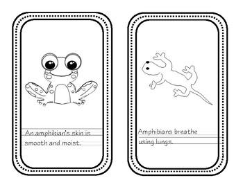 Amphibian Mini Book