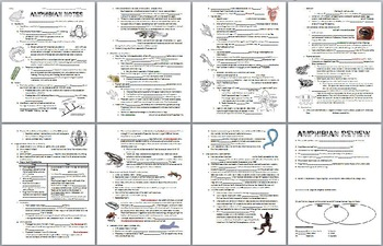 Amphibian Notes Handout, Review Worksheet, & Teacher Keys (Biology / Zoology)