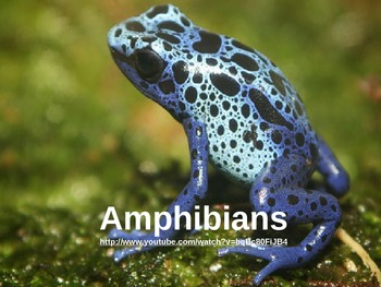 Amphibian Notes - Power Point