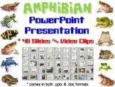 Amphibian PowerPoint Presentation for Biology & Zoology
