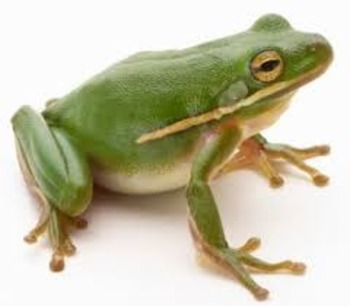 Amphibian the Frog: Educational Song for Life Cycles