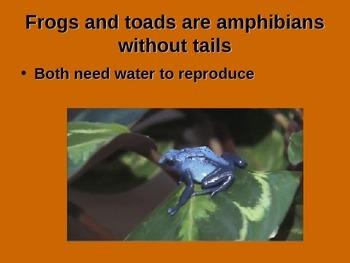 Amphibians (quite a few animations)