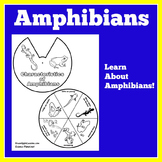 Amphibians Worksheet | Amphibians Activity | Amphibians Craft