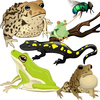 Amphibians Clip Art